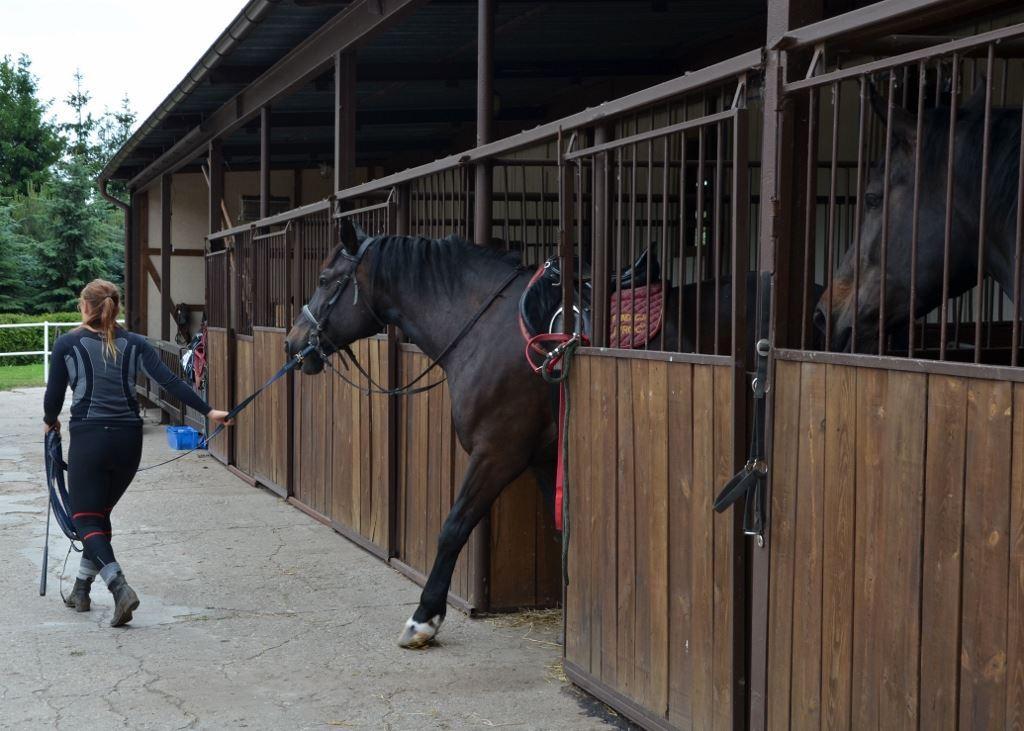 14 Jazdy konne Farma Jantar (9) sml