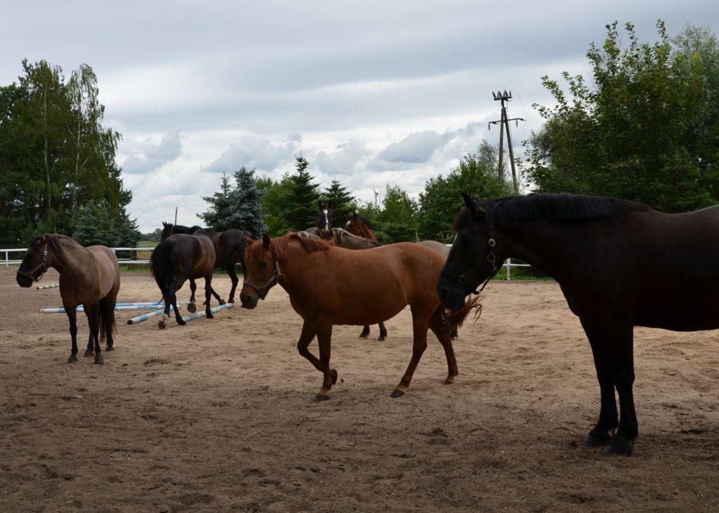 16 Jazdy konne Farma Jantar (12) sml