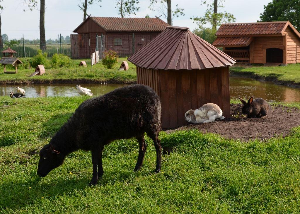 8 Owca wrzosowka Mini ZOO w Jantarze sml