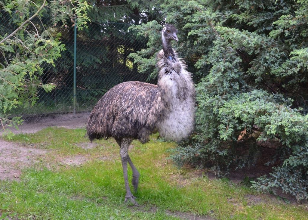31 Emu Mini ZOO w Jantarze (1) sml